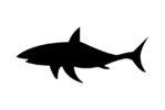 Bandiera pericolo_squali